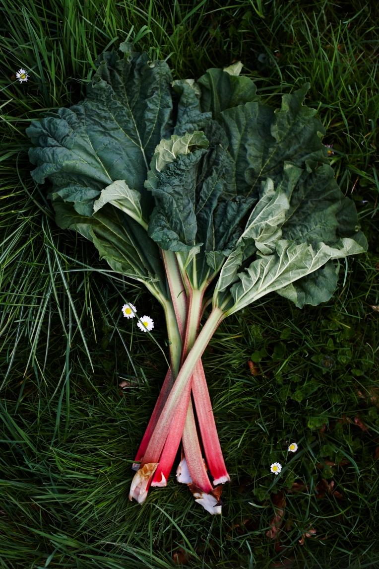 You Mag-May Garden 41992