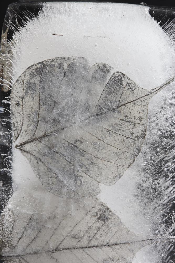 Ice Ice Baby1884